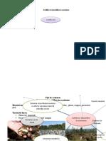 FISE DE LUCRU-echilibre in ecossitem