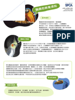 鸚鵡.pdf