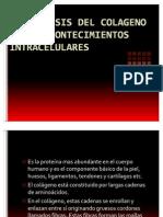 LA SINTESIS DEL COLAGENO Y SUS ACONTECIMIENTOS INTRACELULARES