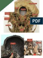 neuro anato m2 pdf 2.pdf