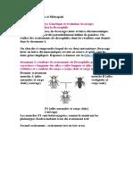 Bac S 2013 Antilles et Métropole.docx