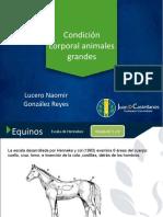 CONDICIÓN CORPORAL equinos, bovinos y ovinos