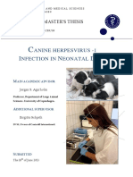 Agerholm 2013 CaHV-1 Infection in neonatal dogs