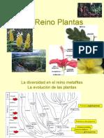 Reino Plantas