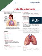 Aparato-Respiratorio-para-Cuarto-de-Primaria