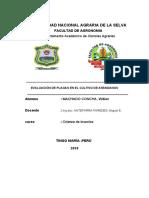 EVALUACION DE PLAGAS EN EL CULTIVO DE ARANDANOS, MACHADO C., W.A.docx