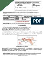 GUIA 1 CIENCIAS NATURALES TERCER PERIDO-2