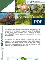 EL_ARBOL_FRUTAL clase 3