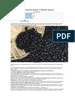 Como sembrar caraotas negras o frijoles negros