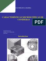 06 Caract. micros. Coniferas-2018