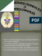 Sistema nervioso ESTRUCTURA Y FUNCION.pptx