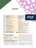 Histo Todo.pdf