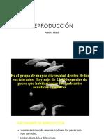 Aguas_Frias_Sesión 4.1  Reproducción.pdf