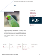 Indian Ring-Necked Parakeet Personality, Food & Care – Pet Birds by Lafeber Co_