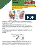 anatomia y fisiologia de las glandulas mamaria