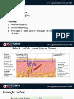 Sistemategumentat2.pdf