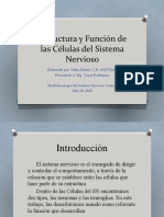Estructura y Función de las Células del SN.pptx