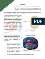 CITOPLASMA.pdf