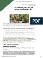 Aloe vera _ culture, entretien et récolte (à petite et grand échelle)