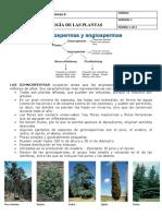 GRADO 8 ISJC CLASIFICACIÓN DE LAS PLANTAS II