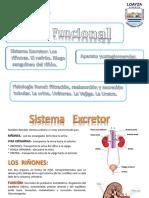 Sistema Excretor.pdf
