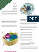 ATIVIDADE_1_-_BIOCEL__tipos_de_celulas-1 2020.ppt