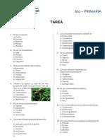 La-Cadena-Alimentaria-para-Sexto-de-Primaria-TAREA