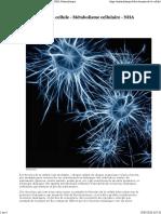 Les besoins de la cellule - Métabolisme cellulaire - NHA Naturolistique