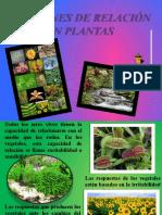 relacion de plantas 2
