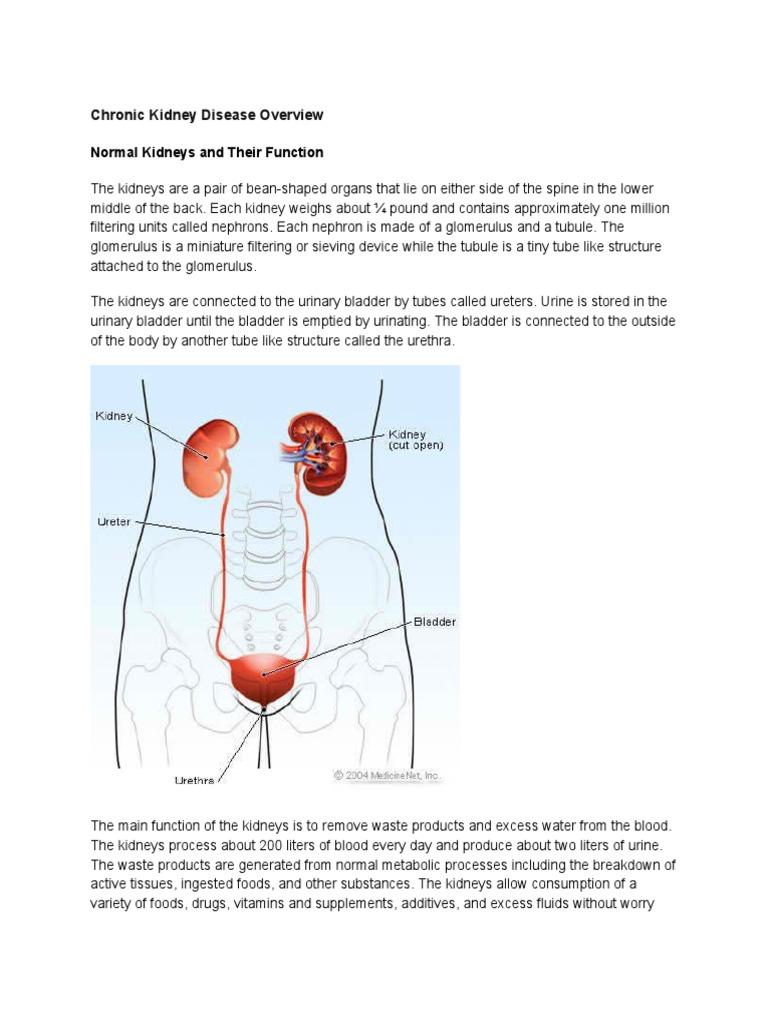 Chronic Kidney Disease Renal Function Creatinine