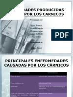 ENFERMEDADES PRODUCIDAS POR LOS CARNICOS