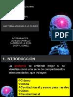 diapositivas cirugia oral.ppt definitivas.ppt