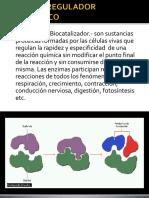 6ta clase - ENZIMAS.pdf