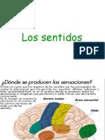 Organos de los Sentidos_E.ppt