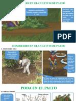 5.- Deshierbo y Poda de palto Abril 2017