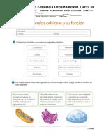 guia biologia once  periodo 2.docx