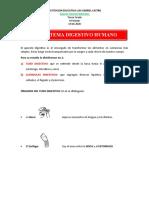 GUIA 24-06-2020 Sistema digestivo