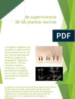 2a Formas de supervivencia de las plantas nocivas16