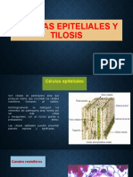 celulas epiteliales.pptx