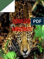 COMPLEXO-2.ppt
