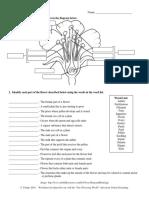 FlowerBasics.pdf