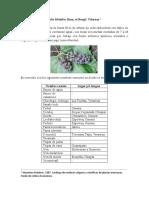 Vitis tiliifolia Hum