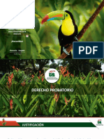 Plantilla institucional UA 2020-V6 Marca Oficial Registrada DERECHO PROBATORIO.pptx