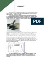 Fotosinteza.doc