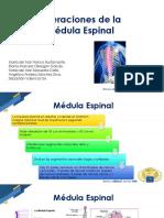 Alteraciones de la Medula Espinal