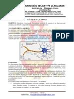 Anatomía de la neurona 8°