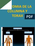 ANATOMIA DE LA COLUMNA Y TORAX - AGOSTO 2019