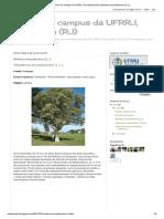 Árvores do campus da UFRRJ, Seropédica (RJ)_ Melaleuca leucadendron (L.) L_