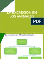 laexcrecinenlosanimalesslide-171018193750 (1).pdf