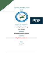 TAREA 6 Y 7 DE ANATOMIA Y FISIOLOGIA